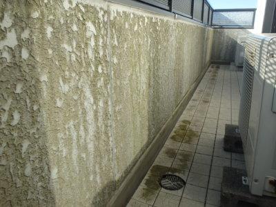 外壁の汚れ藻コケ微生物外壁塗装の事なら浜松塗装専門店 加藤塗装 プロの職人直伝 ベランダ コケ取れない取り方予防方法